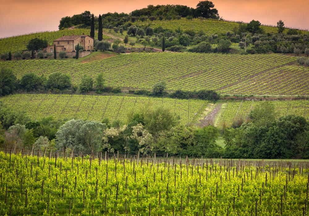 Toscaanse wijn - wijngebied Toscane