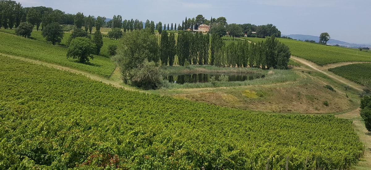 Overzicht van wijnhuis Arnaldo Caprai nabij Montefalco
