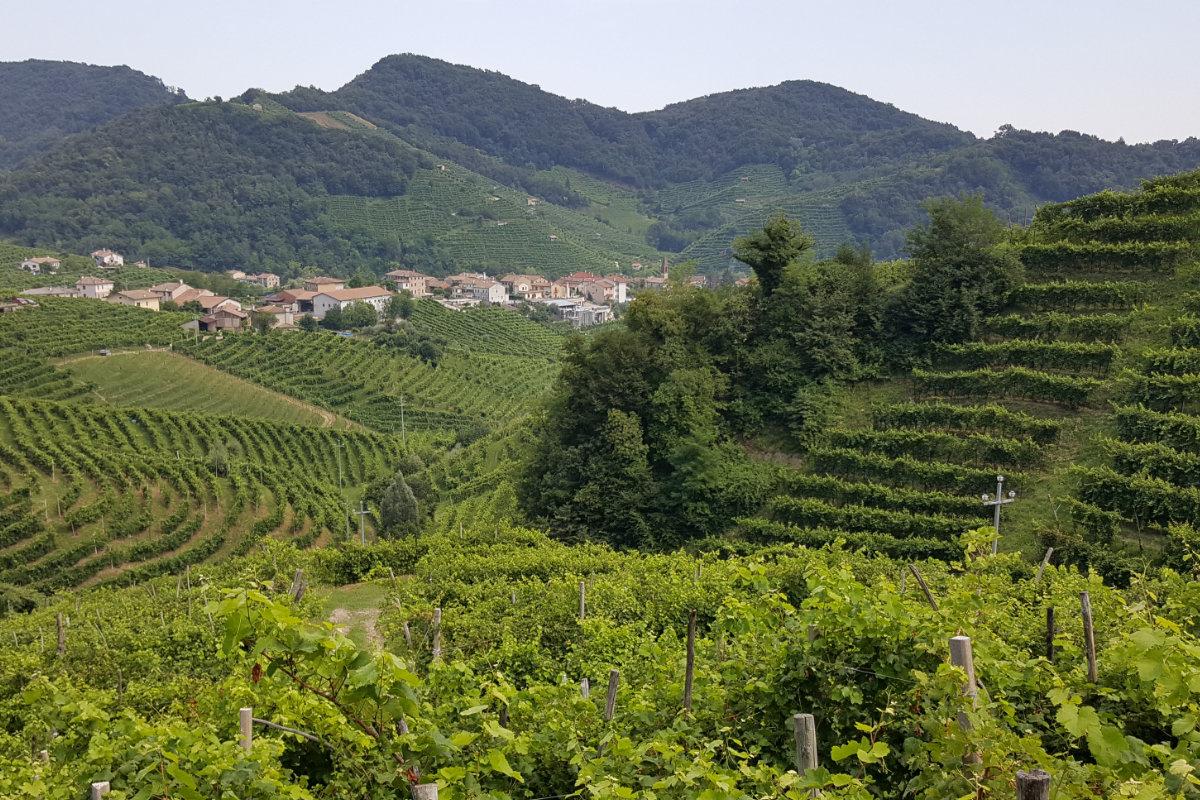 wijnstreek Prosecco - het Cartizze gebied